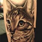 Tabby Cat Tattoo